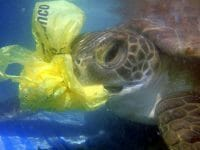 sea_turtle_eats_plastic