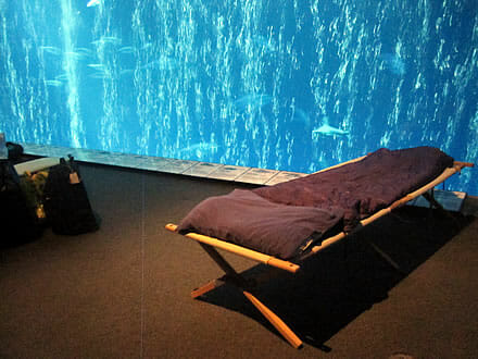 Night at the Aquarium on a Plastic-Free Camping Cot » My Plastic