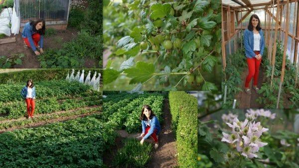 Vetaretus-1. Plastic-free week. Own cultivation.