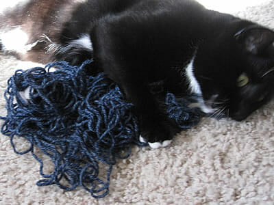 Arya kitty chews yarn