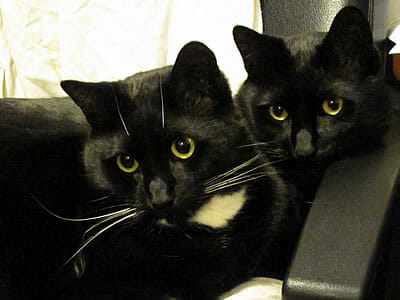Soots and Arya in Michael's chair