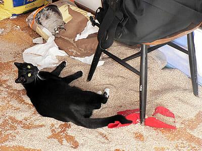 Swheatscoop cat litter