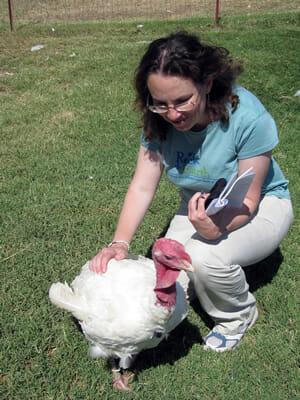 Beth pets turkey