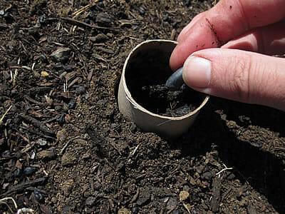 toilet roll plant pot